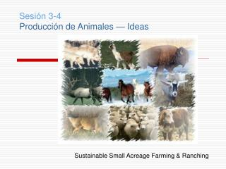 Sesión 3-4 Producción de Animales — Ideas Sustainable Small Acreage Farming & Ranching