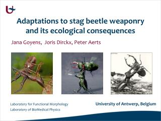 Adaptations to stag beetle weaponry and its ecological consequences