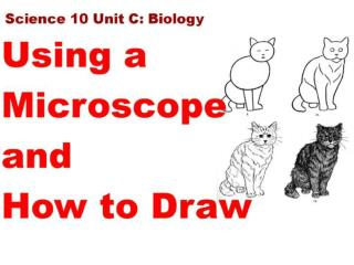 2 Magnification and Microscope Use