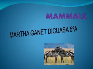 MAMMALS.