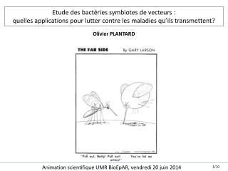 Etude des bactéries symbiotes de  vecteurs :