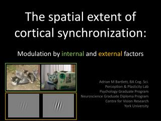 The spatial extent of cortical synchronization:  Modulation by  internal  and  external  factors