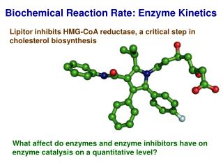 Biochemical Reaction Rate: Enzyme Kinetics