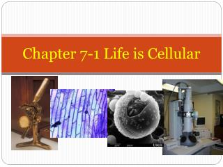 Chapter 7-1 Life is Cellular