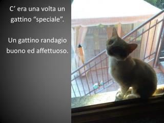 """C' era una volta un gattino """"speciale"""". Un gattino randagio buono ed affettuoso."""
