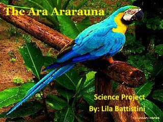 The  Ara Ararauna