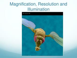 Magnification, Resolution  and Illumination