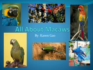 All About Macaws