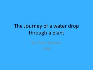 The Journey of a water drop through a plant
