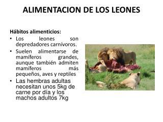 ALIMENTACION DE LOS LEONES