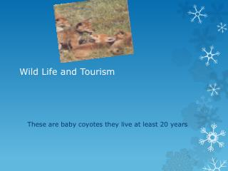 Wild Life and Tourism