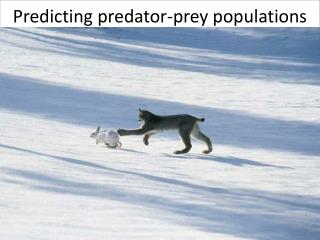 Predicting predator-prey populations