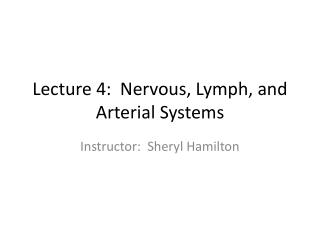 Lecture 4:  Nervous, Lymph, and Arterial Systems