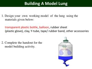 Building A Model Lung