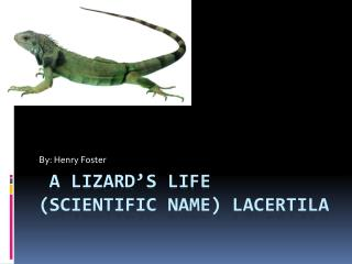 A Lizard's Life (scientific name) lacertila