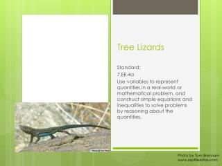 Tree Lizards