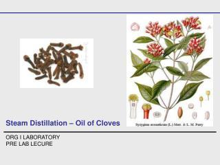 Steam Distillation   Oil of Cloves  ORG I LABORATORY PRE LAB LECURE