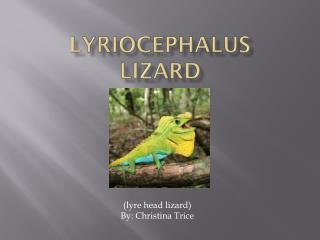 Lyriocephalus   Lizard