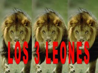 LOS 3 LEONES