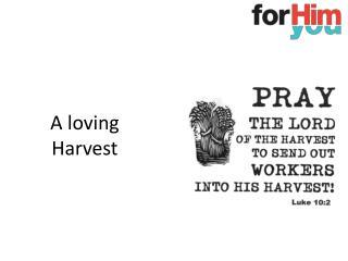 A loving Harvest