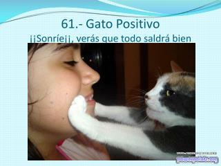 61.- Gato Positivo ��Sonr�e��, ver�s que todo saldr� bien