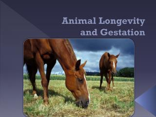 Animal Longevity         and Gestation