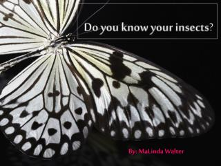 Do  you know your insects ?