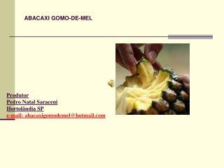 Produtor  Pedro Natal Saraceni Hortolândia SP e-mail: abacaxigomodemel@hotmail