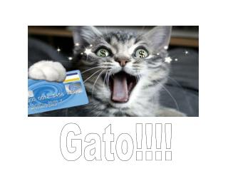 Gato!!!!