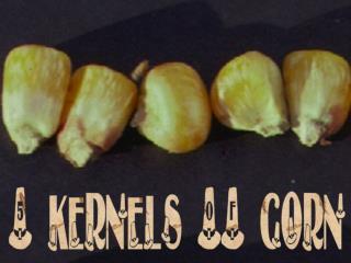 5 kernels OF corn