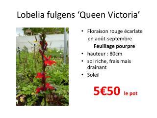 Lobelia  fulgens  ' Queen  Victoria'
