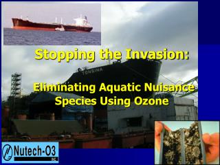 Stopping the Invasion:   Eliminating Aquatic Nuisance Species Using Ozone