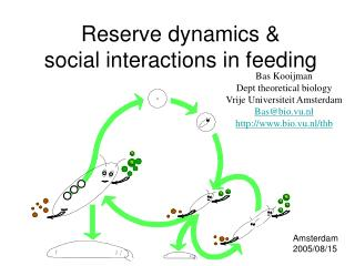 Reserve dynamics &  social interactions in feeding