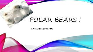 Polar bears !