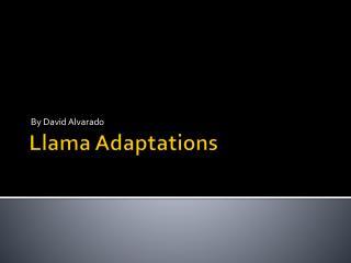 Llama Adaptations