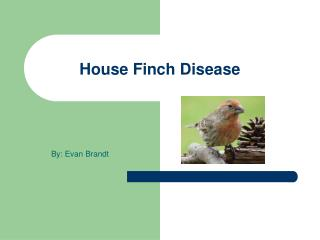 House Finch Disease