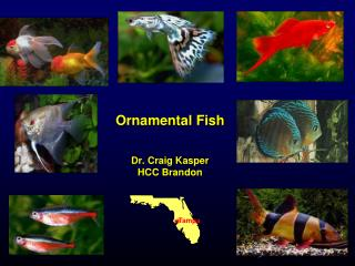 Ornamental Fish Dr. Craig Kasper HCC Brandon