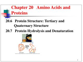 Chapter 20   Amino Acids and Proteins