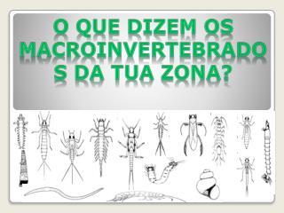 O que dizem os  macroinvertebrados  da tua zona?