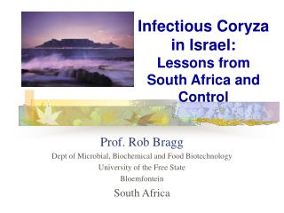 Infectious Coryza in Israel:  Lessons from South Africa and Control