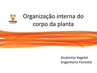 Organiza��o interna do  corpo da planta