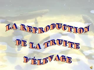La reproduction de la truite d'élevage