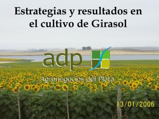 Estrategias y resultados en el cultivo de Girasol