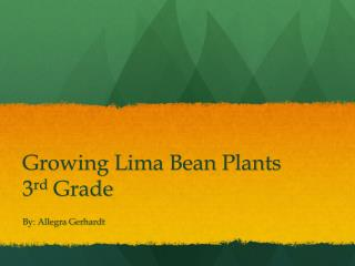 Growing Lima Bean Plants 3 rd  Grade