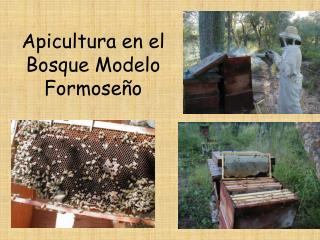 Apicultura en el  Bosque Modelo  Formoseño