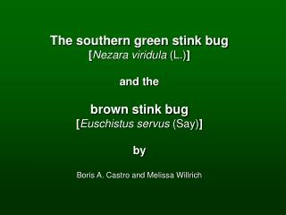 The southern green stink bug [ Nezara viridula  (L.) ] and the brown stink bug