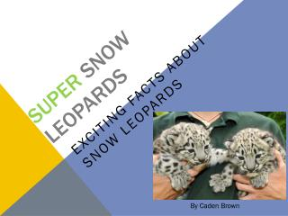 Super  snow leopards