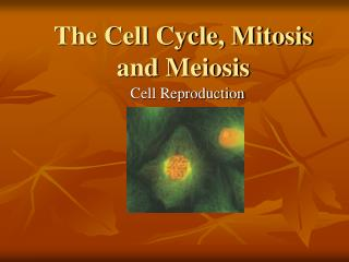 The Cell Cycle, Mitosis and Meiosis