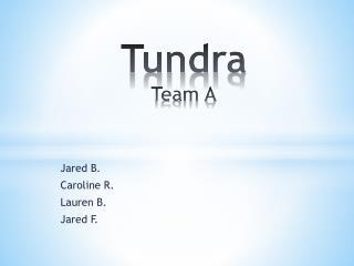 Tundra Team A