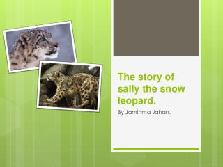 The story of sally the snow leopard.